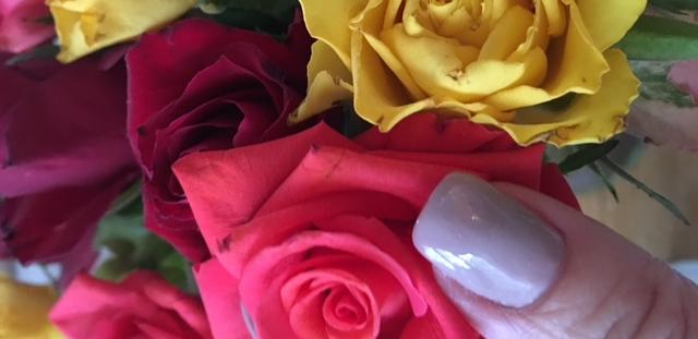 Rosen zum Valentinstag für Escort Hamburg